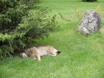 在草的一条狗 库存照片