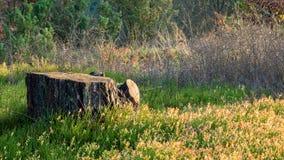 在草的一种美好的类型盖的老树桩 库存图片
