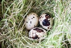 在草的三个鹌鹑蛋 库存图片