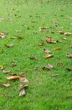 在草的下落的叶子 图库摄影