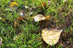 在草的下落的叶子 免版税库存照片