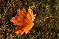 在草的下落的叶子 库存图片