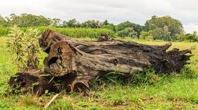 在草的下落的树干 库存照片