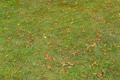 在草的下落的桔子叶子 纹理 免版税库存照片