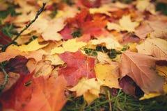 在草的下落的秋叶在早晨 库存照片