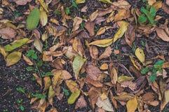 在草的下落的秋叶在晴朗的早晨光, 免版税库存图片