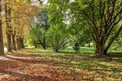 在草的下落的秋叶在晴朗的早晨点燃 免版税库存图片