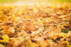 在草的下落的秋叶在晴朗的早晨 库存照片