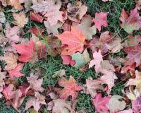 在草的下落的秋叶 库存图片
