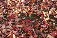 在草的五颜六色的秋天叶子 免版税库存照片