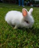 在草的兔宝宝 免版税库存图片