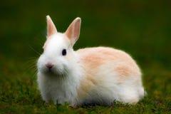 在草的兔宝宝 库存图片