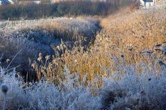 在草的冬天霜 免版税库存图片