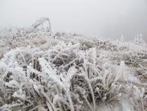 在草的冰和雪 免版税库存图片