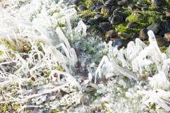 在草的冰柱 免版税图库摄影
