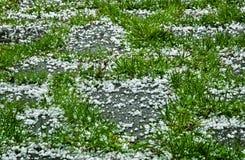 在草的冰雹 库存图片