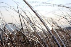 在草的冰 库存照片