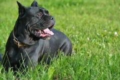 在草的出价狗 免版税图库摄影