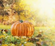 在草的南瓜与在秋天庭院backgroun的秋天叶子  库存图片