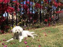 在草的可爱的狗 库存图片