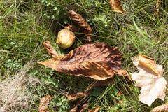 在草的叶子 图库摄影