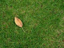 在草的叶子 库存图片