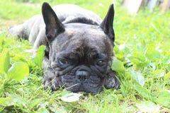 在草的哀伤的狗 库存照片