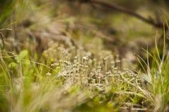 在草的地衣 免版税图库摄影