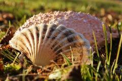 在草的壳 免版税库存照片