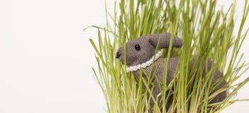 在草的复活节兔子 库存图片