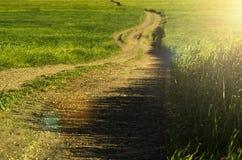 在草的夏天道路 图库摄影