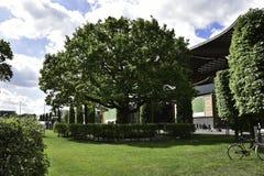 在草的大偏僻的绿色树 免版税库存图片