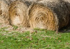 在草的大圆的干草捆 图库摄影