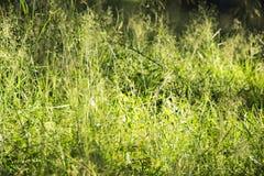 在草的太阳 免版税图库摄影
