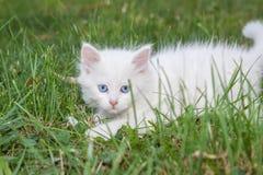 在草的嬉戏的小猫 免版税库存图片