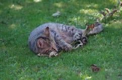 在草的嬉戏的小猫 库存图片