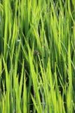 在草的宏观世界龙飞行 免版税库存图片