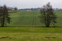 在草的宿舍在绿色草甸和山坡村庄房子 免版税图库摄影