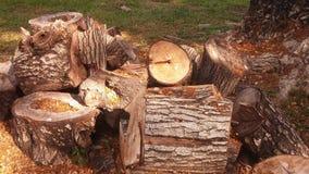 在草的小木材 免版税图库摄影