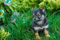 在草的小狗 免版税库存图片