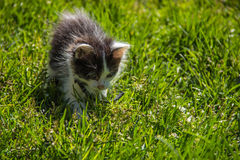 在草的小猫 库存图片