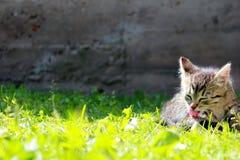 在草的小猫 免版税库存照片