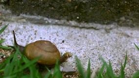在草的履带牵引装置蜗牛 宏观录影 影视素材
