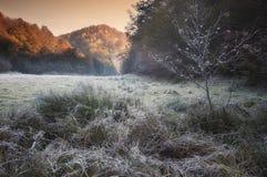 在草的弗罗斯特在与日出光的一个秋天早晨 免版税库存图片
