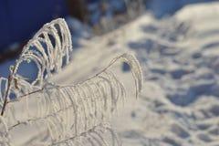 在草的惊人的霜和霜水晶在与蓝天的阳光下在背景中在冬天早晨 图库摄影
