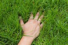 在草的手 库存图片