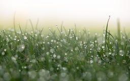 在草的抽象露水 免版税库存图片