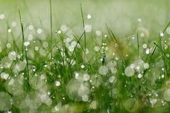 在草的新鲜的早晨露水 免版税库存图片