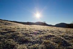 在草的早晨冰 库存图片