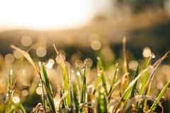 在草的早晨露水在阳光下 免版税库存照片